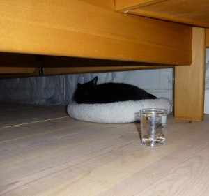 Lukkie geneest zichzelf onder het bed