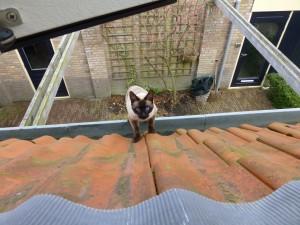Finn komt vanuit het park over daken