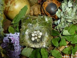 vogelnestje, achtergelaten in nestkast