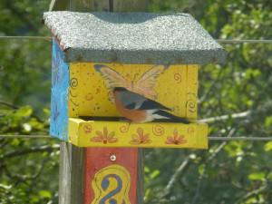 vogelhuisje met goudvink