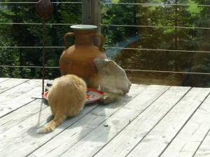 Leo drinkt uit de vogeldrinkbak