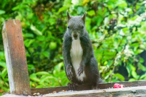 uitheemse eekhoorn