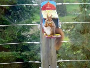 dàg eekhoorn