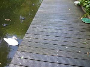 een zwaan houdt dagen lang de wacht bij Zora's mand: is dit een teken? wil hij haar meenemen naar de overkant?