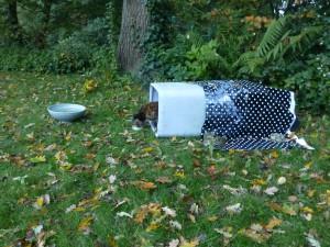 het regent en Zora wil niet naar binnen, dus twee vuilnisbakomhulsels om haar reismandje en een plastic tafelkleed