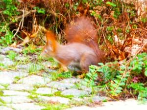eekhoorn verstopt buit