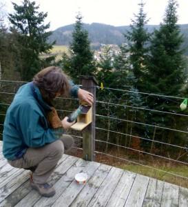 Kees plaatst eigenhandig getimmerd eekhoorn voederhuisje
