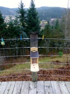 eekhoorn voederhuisje hangt en ook de kerstverlichting en vogelballen
