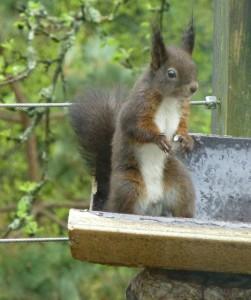 de eekhoorn voor ons raam