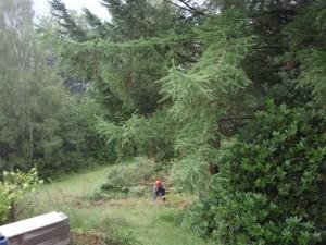 er moeten bomen weg uit ons bos...