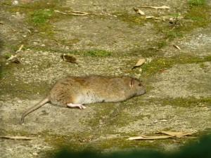 wie weet wat dit voor dier is? Formaat schat ik op 20 cm excl. staart. Bodem: zand.