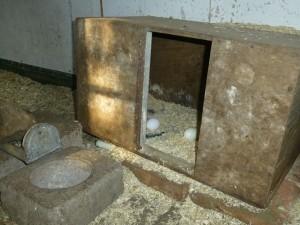 dit oude hondenhok was het leghok, met zielig zaagsel als bodembedekking, en dan toch eieren