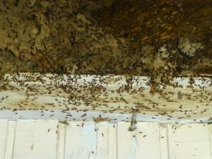een mierennest achter de plastic schrootjes van weleer