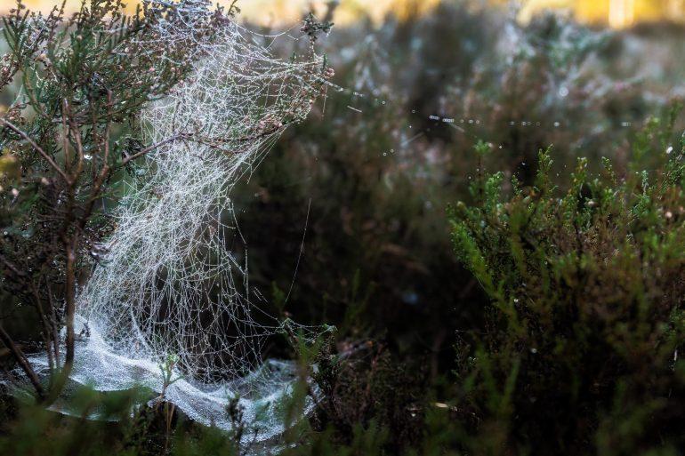 Marco Vellinga herfst ~ web