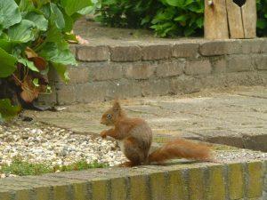 eekhoorn en eekhoornhuisje